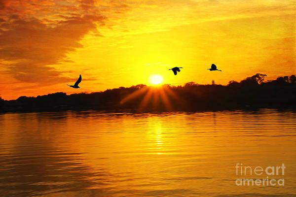 Shorebird Photograph - Sunset And Shorebirds by Laura D Young