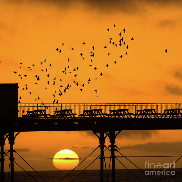 Sunset And Starlings In Aberystwyth Wales Art Print