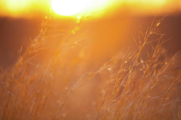 Photograph - Sunset And Tall Grass by SR Green
