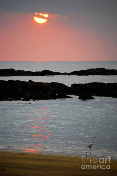 Cesar Wall Art - Photograph - Sunset And White Heron by Cesar Marino