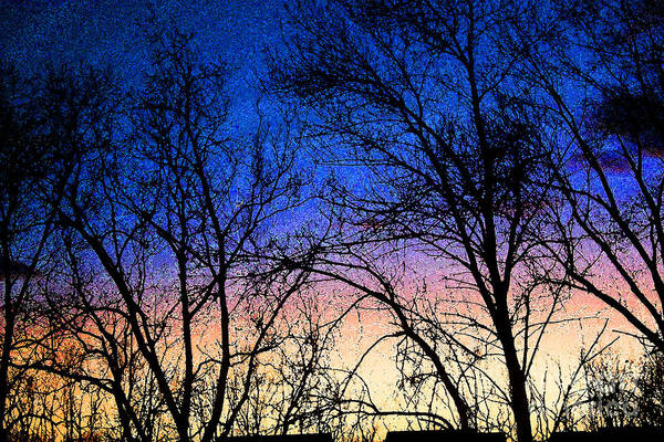 Photograph - Sunset And Winter Trees by Karen Adams