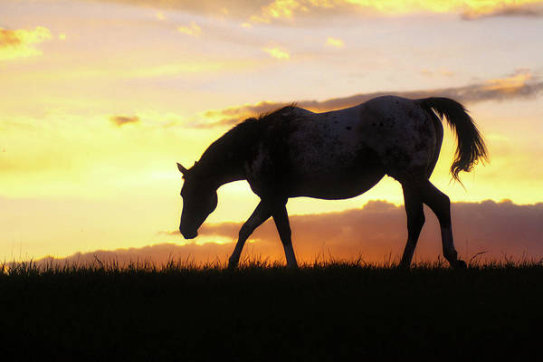 Photograph - Sunset Appy by Bryan Smith