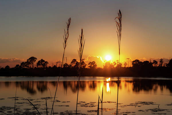 Sunset At Gator Hole 3 Art Print
