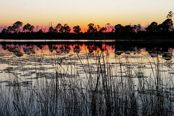 Sunset At Gator Hole Art Print