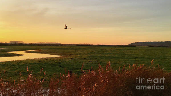 Swan Photograph - Sunset At Holkam by John Edwards