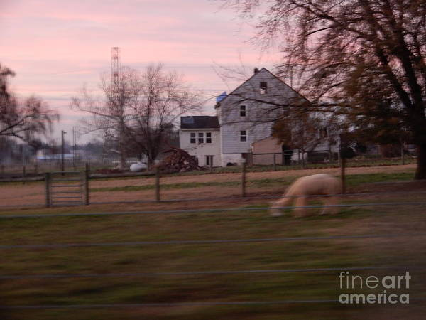 Photograph - Sunset At The Alpaca Farm by Christine Clark