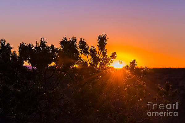 Photograph - Sunset At The Grand Canyon by Anthony Sacco