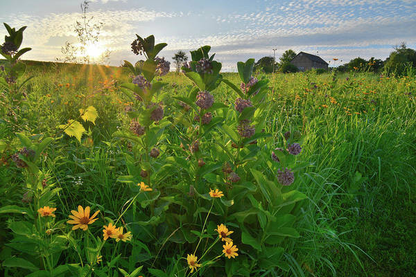 Photograph - Sunset Backlights Wildflowers In Glacial Park by Ray Mathis