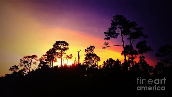 Photograph - Sunset Behind The Pines by Rachel Hannah
