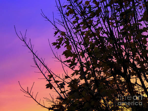 Photograph - Sunset Behind Trees by Colin Rayner