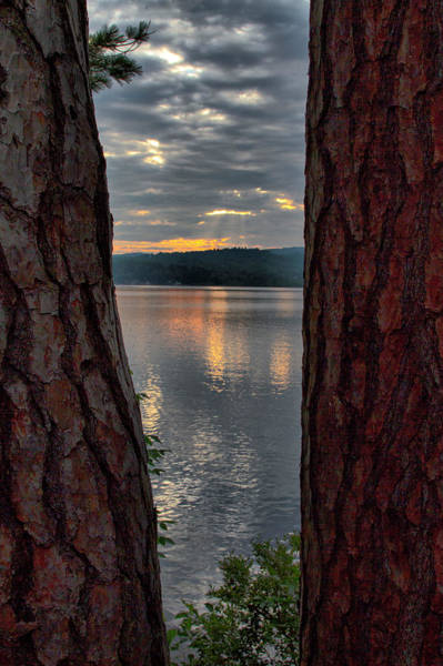 Photograph - Sunset Between Trees  by Betty Pauwels