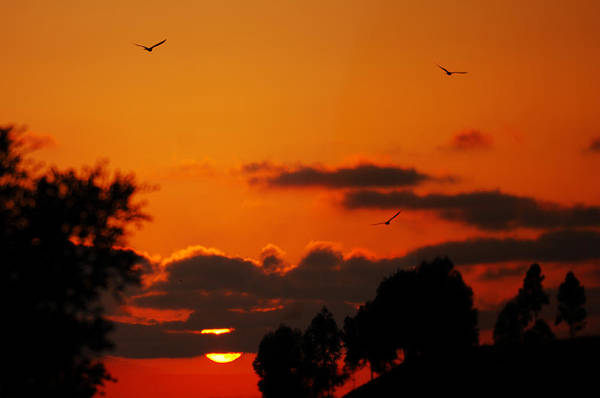 Photograph - Sunset Birds by Jill Reger