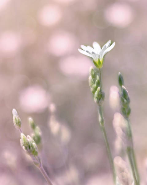 Photograph - Sunset Bloom by Jennifer Grossnickle