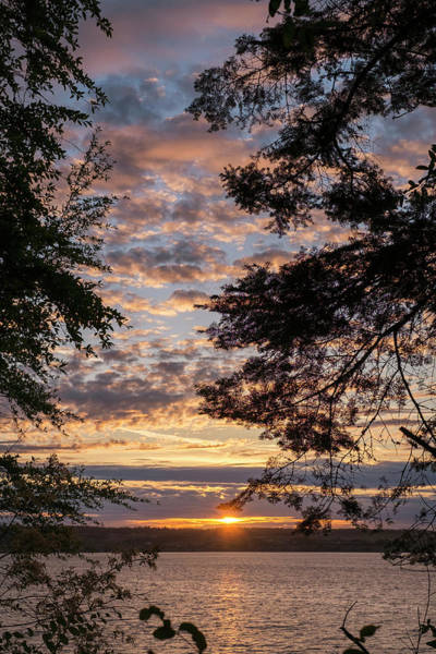 Photograph - Sunset Caressed By Tree Branch by Mary Lee Dereske