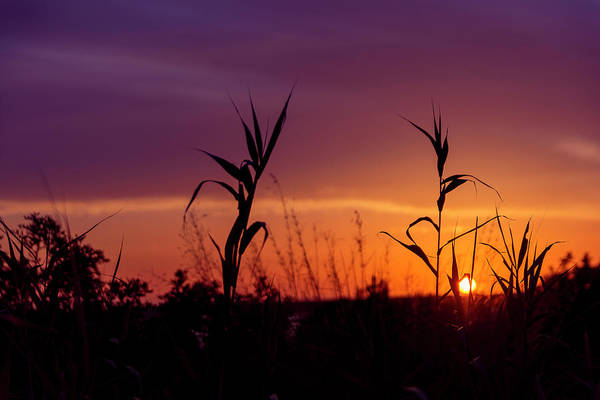 Art Print featuring the photograph Sunset Colours by Nikos Stavrakas