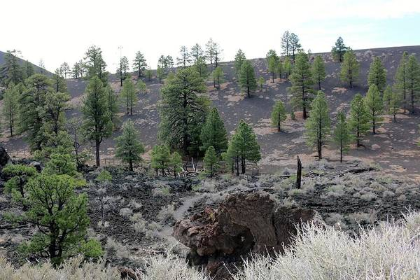 Photograph - Sunset Crater Volcano National Monument - 2 by Christy Pooschke