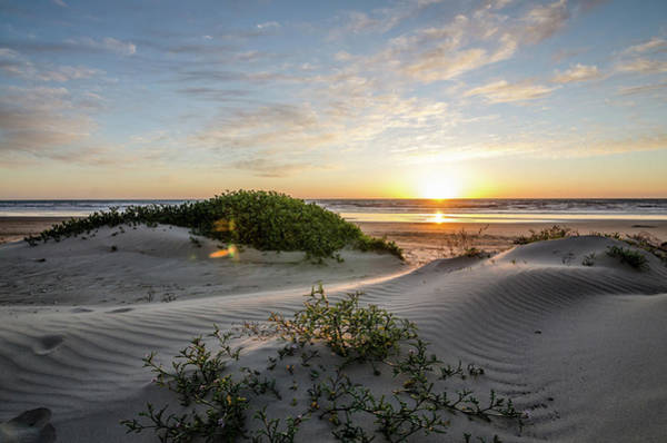 Photograph - Sunset Dunes by Margaret Pitcher