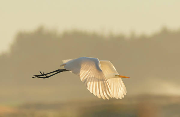 Photograph - Sunset Egret by Loree Johnson