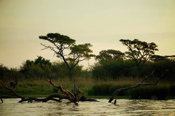 Goliath Photograph - Sunset Endings For Nyala And Goliath by Nancy Morrison