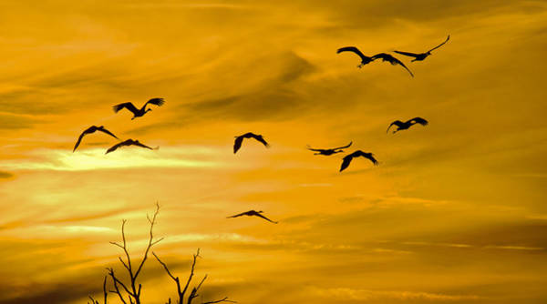 Photograph - Sunset Fliers by Wanda Krack