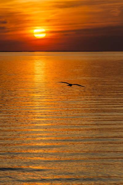 Wall Art - Photograph - Sunset Flight by Oscar Gutierrez