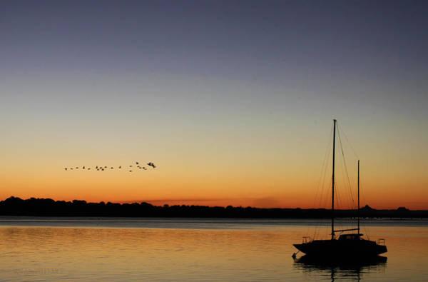 Photograph - Sunset Flight by Susan Vineyard