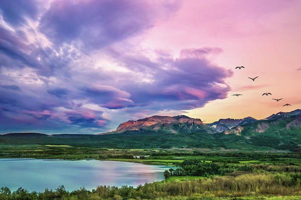 Photograph - Sunset Flight by Tracy Munson