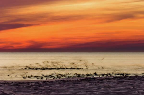 Sunset Flock Art Print