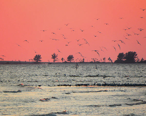 Photograph - Sunset For The Birds by Rosalie Scanlon