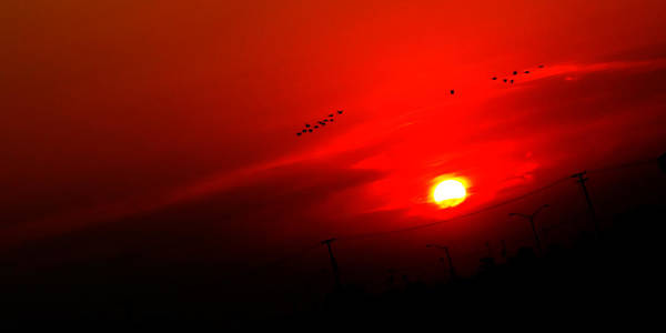 Sunset Geese Leaving Disappearing City - 0814  Art Print
