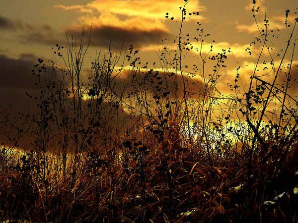Sunset Grasses Art Print