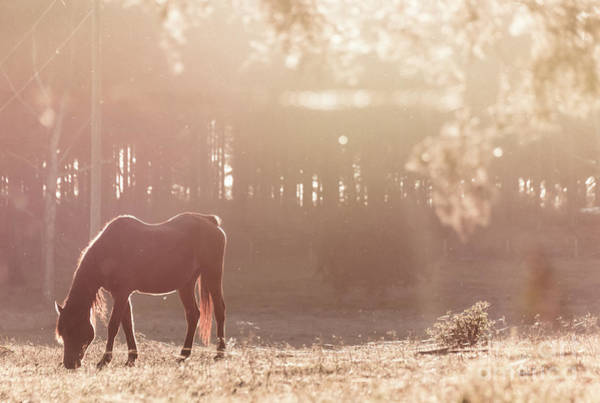 Photograph - Sunset Graze by Andrea Anderegg