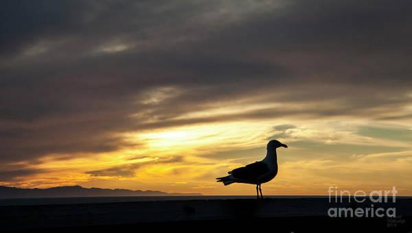 Photograph - Sunset Gull Silhouette by David Millenheft