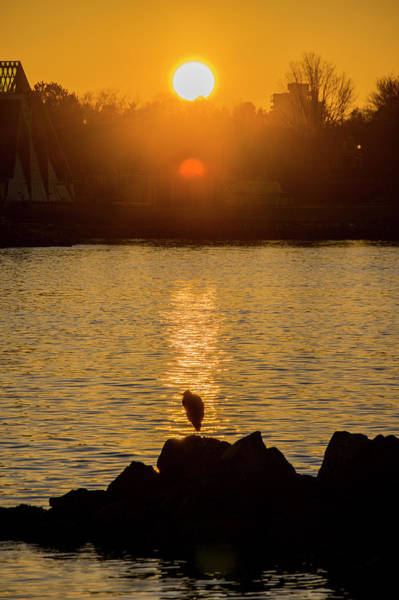 Photograph - Sunset Heron by Ross G Strachan