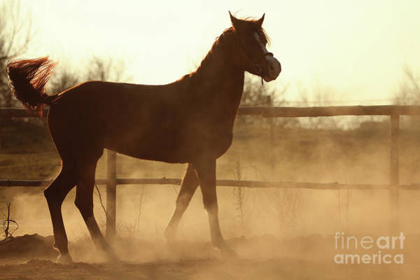 Photograph - Sunset Horse Portrait In Summer Day by Dimitar Hristov