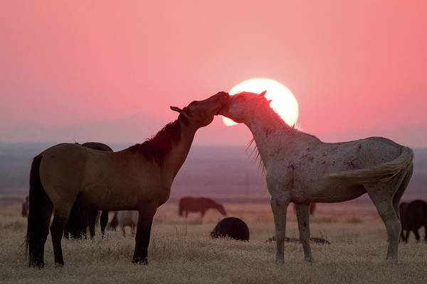 Photograph - Sunset Horses by Wesley Aston