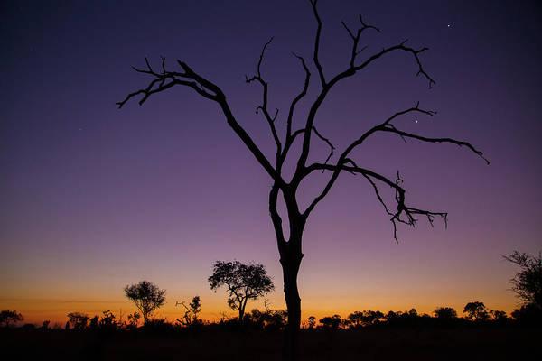 Photograph - Sunset In Africa by Matt Cohen