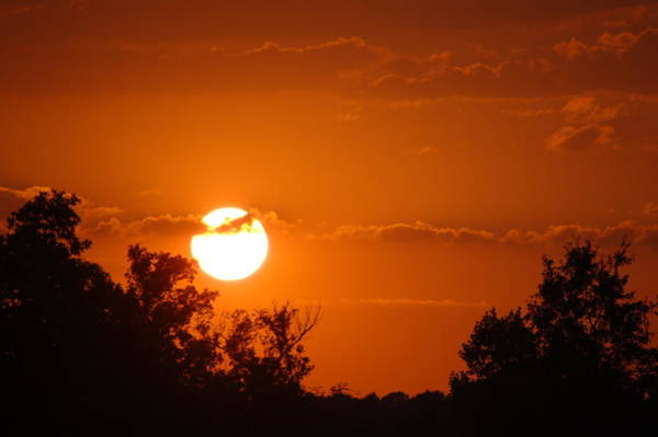 Photograph - Sunset In Charleston by Donna Bentley
