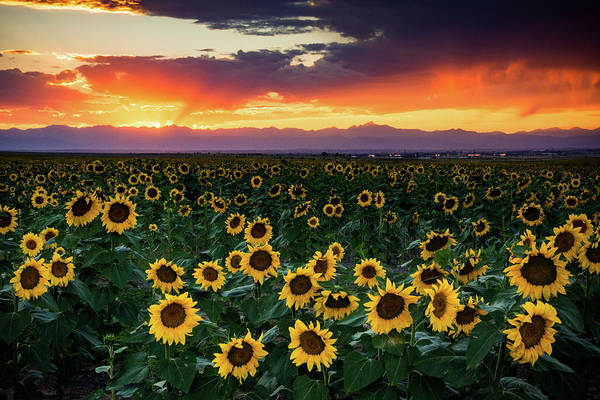 Photograph - Sunset In Colorado Is Paradise by John De Bord