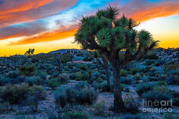 Joshua Tree National Park Photograph - Sunset In Joshua Tree by Art K