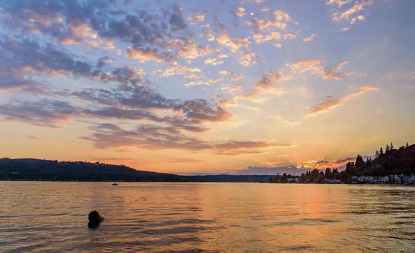 Sunset In Lake Sammamish Art Print