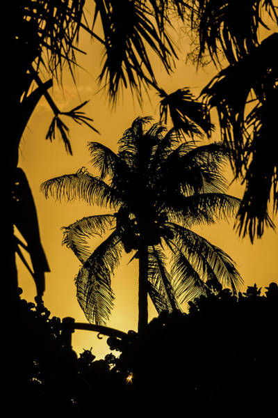 Photograph - Sunset In Lake Worth by Wolfgang Stocker