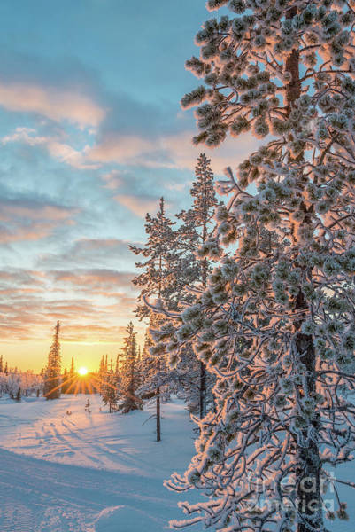 Finland Photograph - Sunset In Lapland by Delphimages Photo Creations