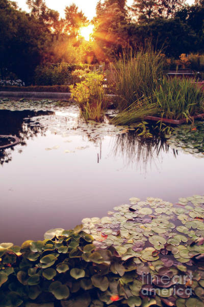 Photograph - Sunset In Park  by Ariadna De Raadt