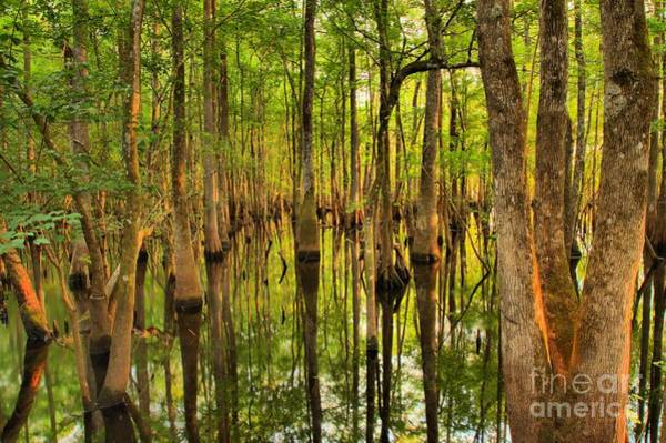 Photograph - Sunset In The Florida Cypress by Adam Jewell