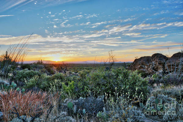 Photograph - Sunset In The Sonoran Desert by David Levin