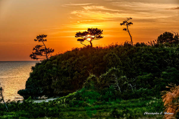 Photograph - Sunset In The Tree by Christopher Holmes