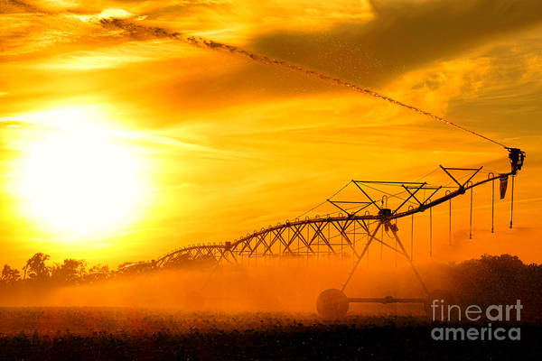 Wall Art - Photograph - Sunset Irrigation by Olivier Le Queinec