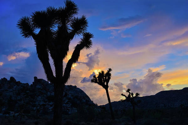 Photograph - Sunset Joshua Tree by Kyle Hanson