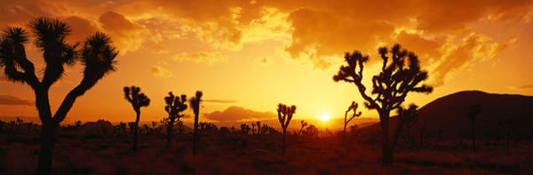 Wall Art - Photograph - Sunset, Joshua Tree Park, California by Panoramic Images